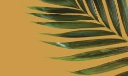 H-Icon_Ch25_Palm_icon